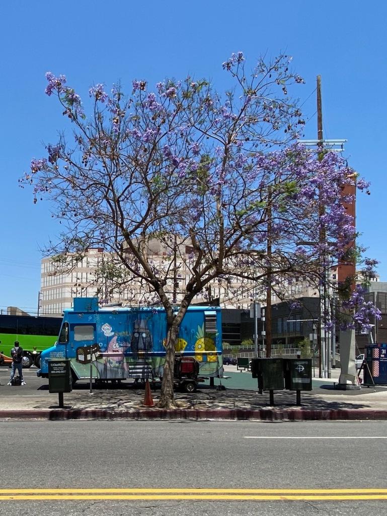 Street Photography: Food Truck Under Purple Tree