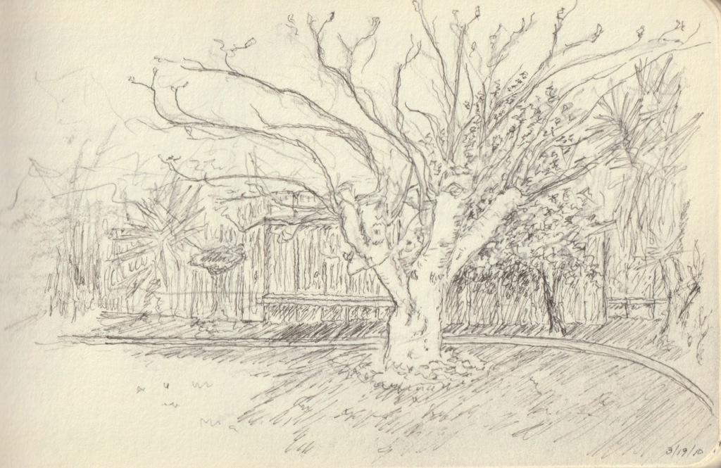 Vintage Sketch Book Series: Fig Tree (March 2010)