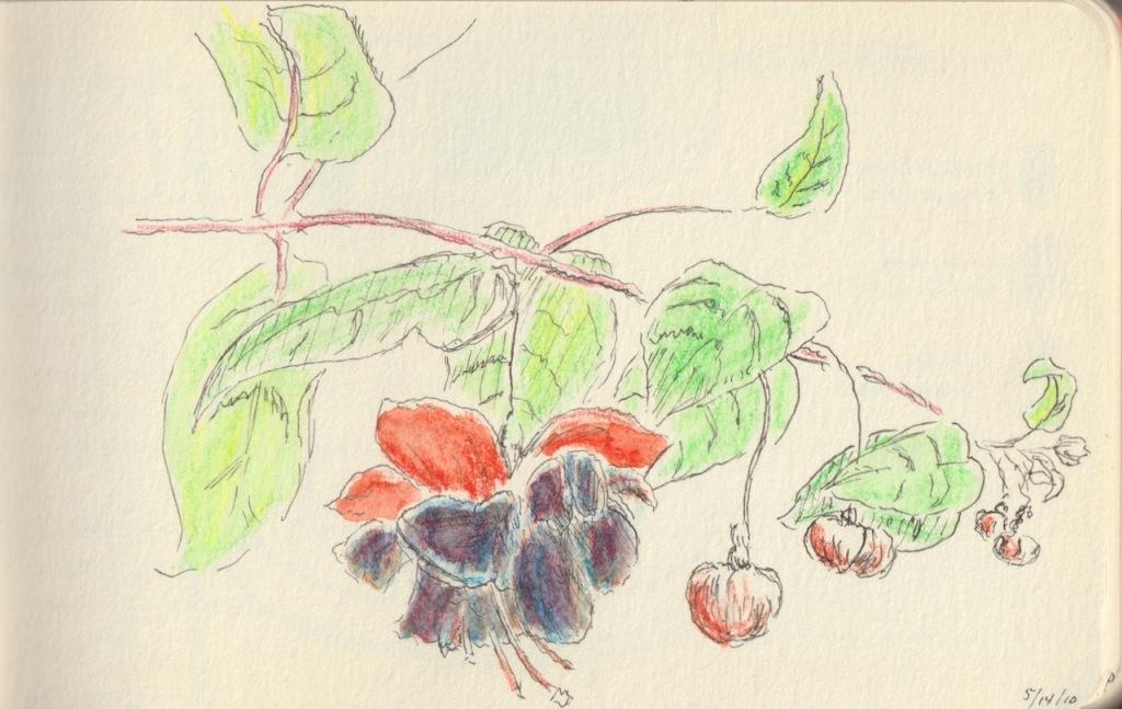 Sketch Book Series: Fuchsia (May 2010)