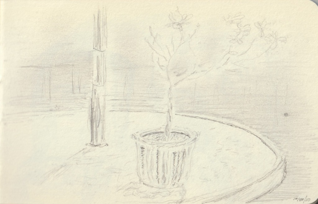 Vintage Sketch Book Series: Plant on Table (October 2010)