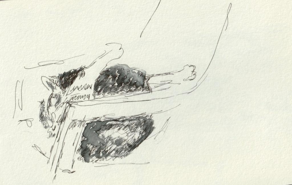 Vintage Sketch Book Series: Pen/Wash Cat, Self Grooming (May 2011)