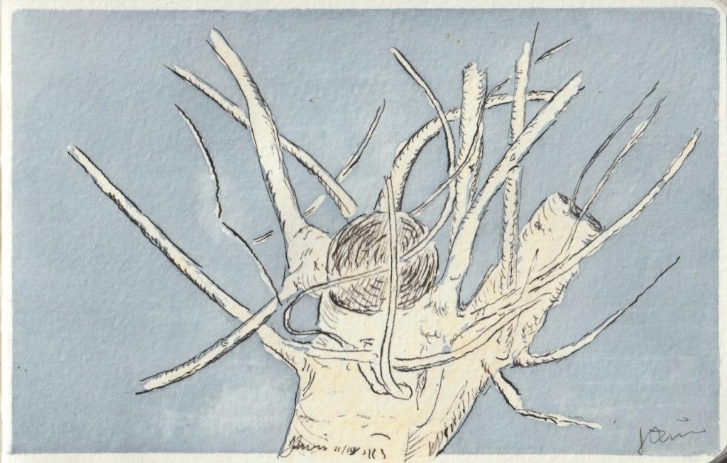 Vintage Sketch Book Series: Pruned Fig Tree (November 2011)