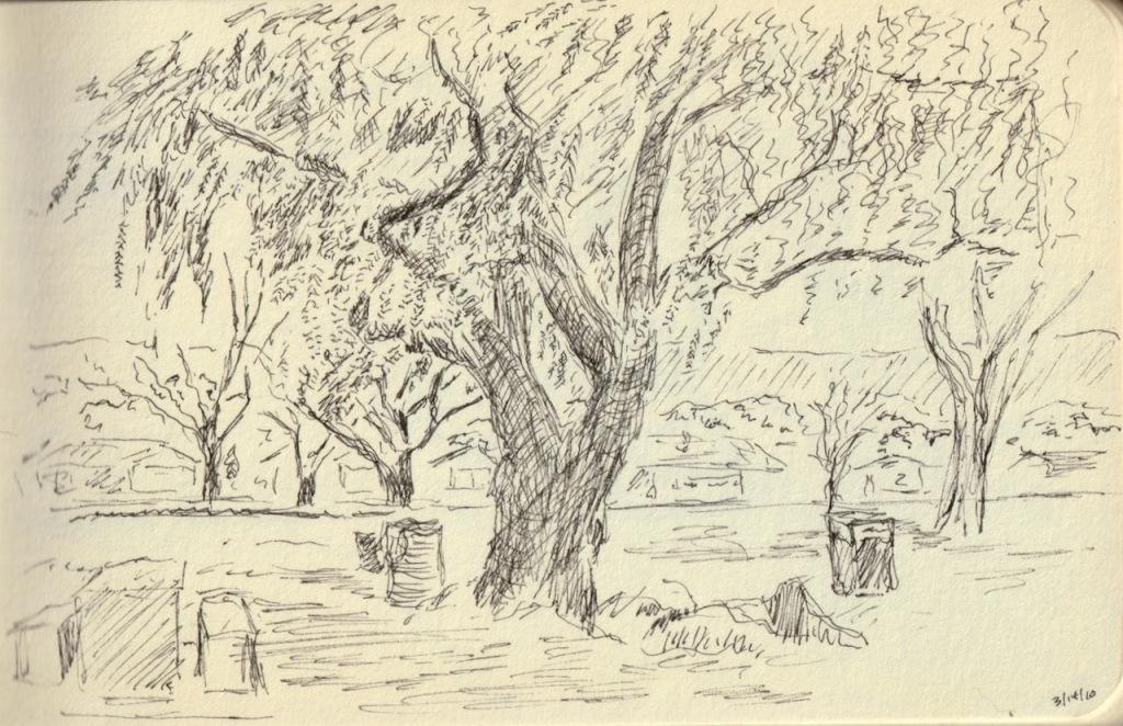 Vintage Sketch Book Series: Tree by Pond (March 2010)
