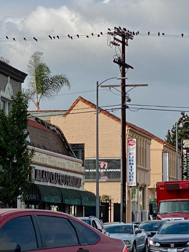 Street Photography: Birds on Wires