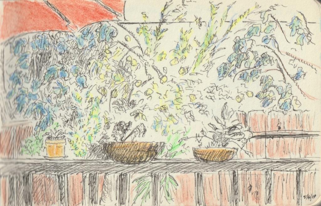 Vintage Sketch Book Series: Back Yard (May 2010)